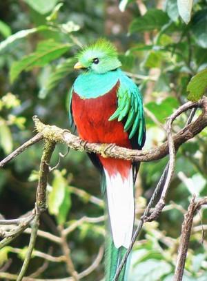 Boquete Panama bird watching
