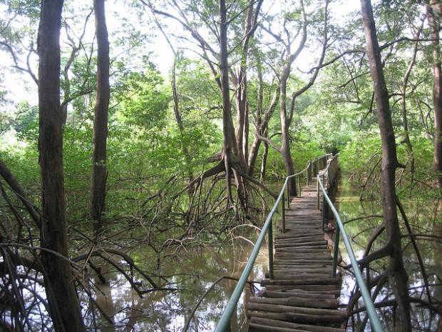 Nosara Biological Reserve