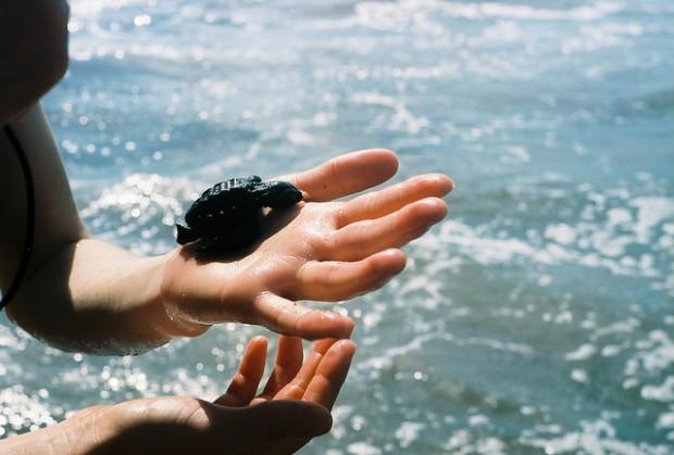 Baby Turtles in Nosara