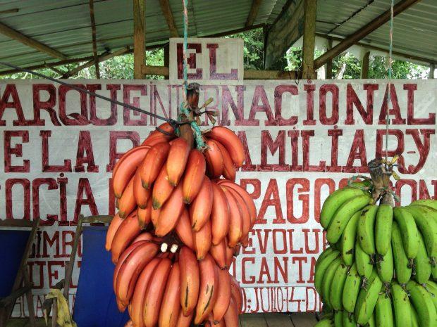 banana-1204168_1920